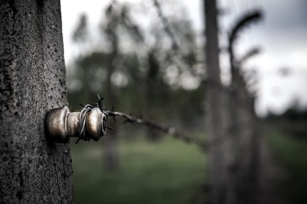 Barbed wire fence closeup view, auschwitz ii
