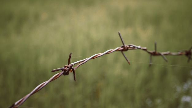 Barbed wire on fence