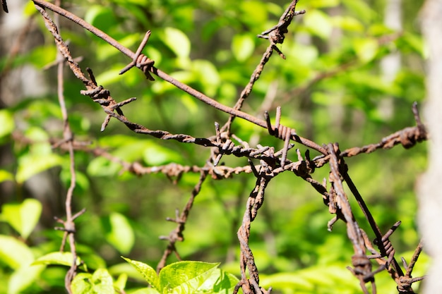 Barbed wire under sunshine. water drops on sharp wire knots. garden fence protecting property.