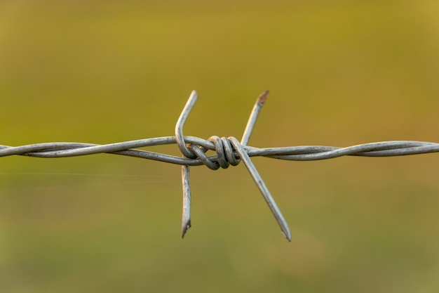 Barbed wire with blur nature with copy space