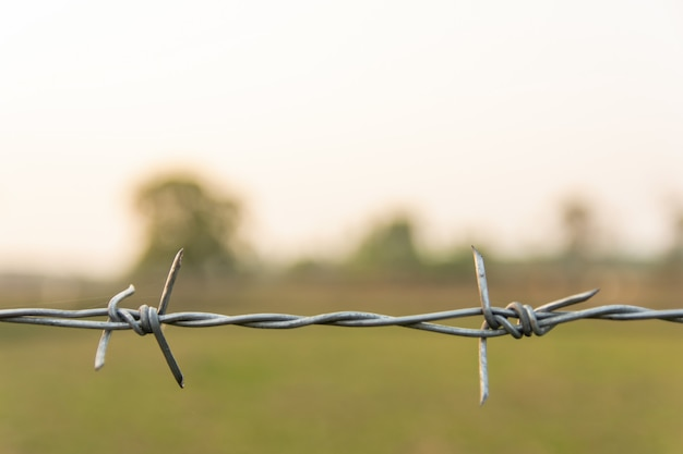 Barbed wire with blur nature