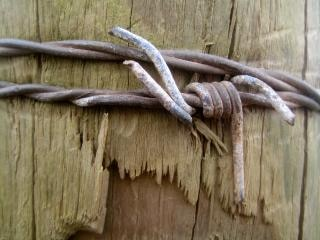 Barbed wood