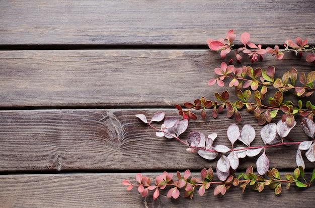 Ветви барбариса на старых деревянных фоне