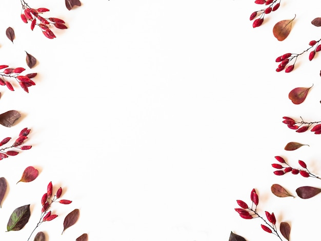 Barberry and leafs frame isolated on white