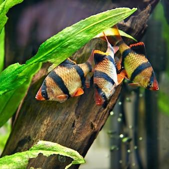 水族館のニシキヘビ