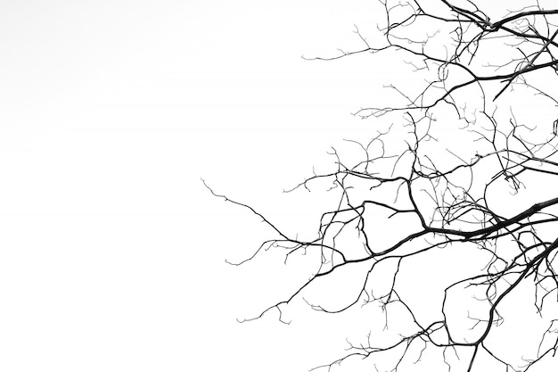 Bare branches on white background with copy space