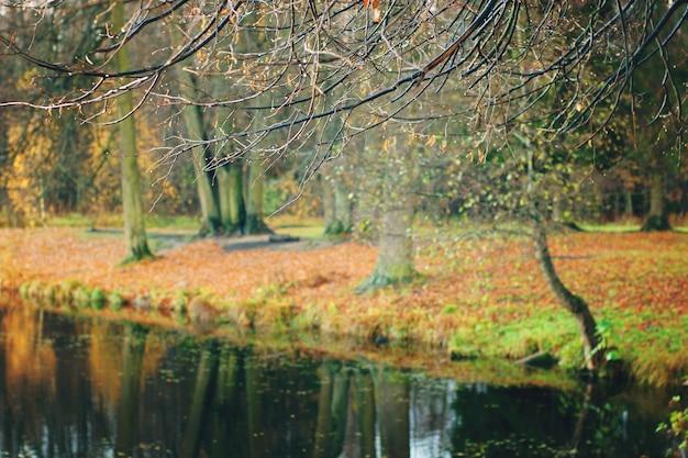 湖のほとりに雨滴が垂れ下がる裸の枝と、海岸の秋の森を反映しています。