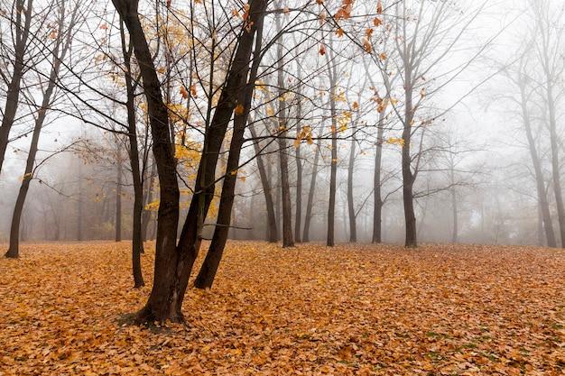秋の裸の落葉樹
