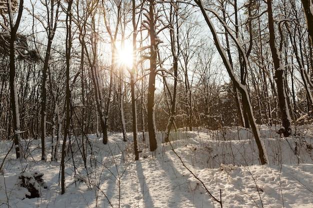 Голые лиственные деревья на снегу зимой, красивая зимняя природа после снегопада и мороза, лиственные деревья разных пород после снегопада