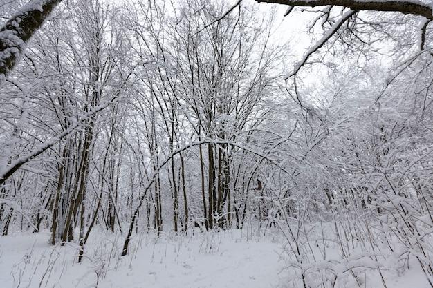 겨울에는 눈 속의 벌거 벗은 낙엽수, 강설과 서리가 내린 후의 아름다운 겨울 자연, 강설 후 다른 품종의 낙엽수