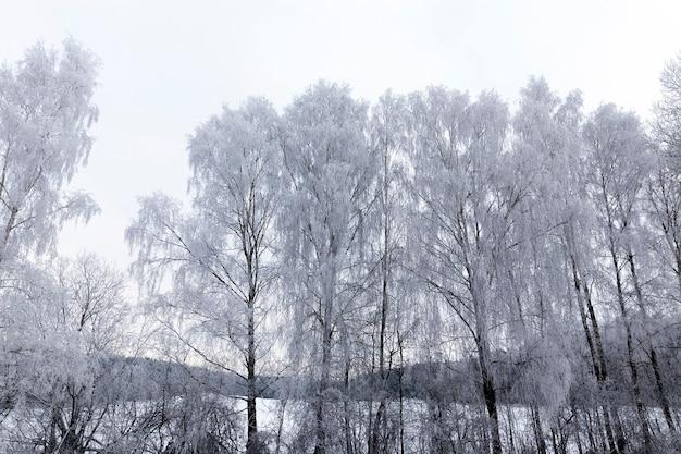 눈이 내리고 서리가 내린 겨울철에 촬영 된 낙엽수. 흐린 날씨 동안 사진, 하늘은 회색입니다
