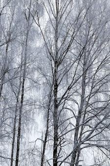 눈과 서리 후 겨울철에 촬영 된 벌거 벗은 낙엽수, 흐린 날씨 동안 사진