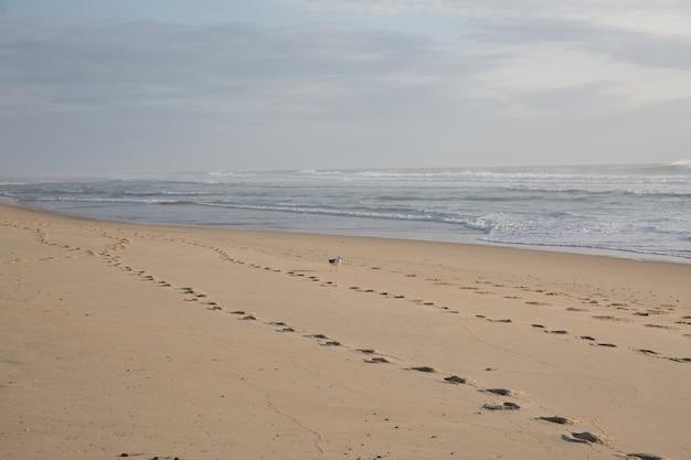 해변에서 모래에 맨발로
