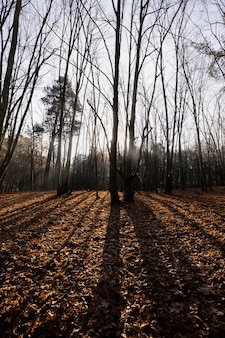 Bare forest at the end of fall