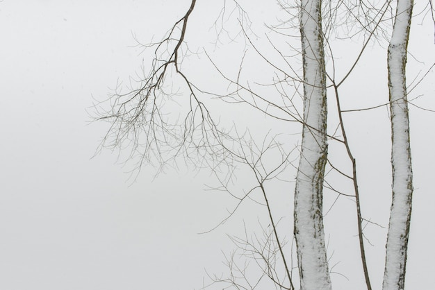 Bare tree branches against white snow background