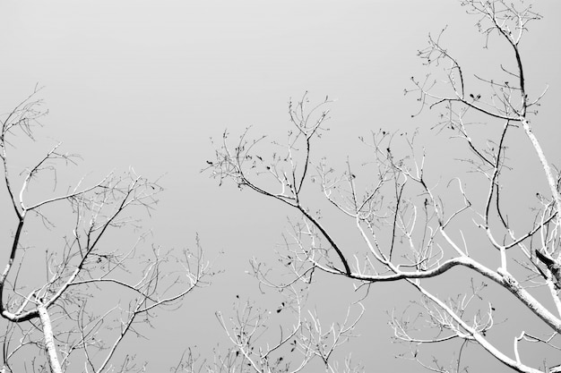 Bare tree branches, monochrome