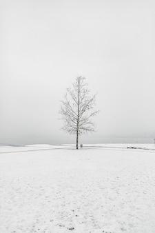 澄んだ空の下の雪の地域で裸の木