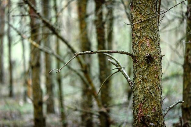 春先の裸木。