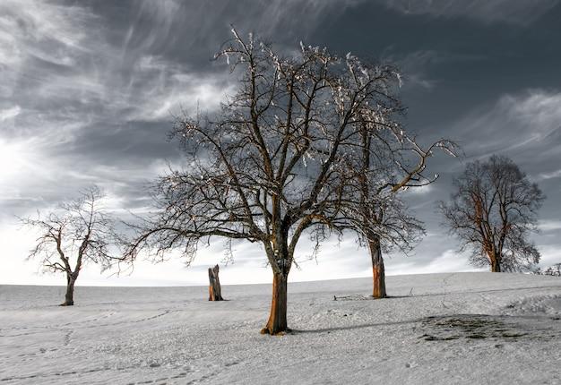 フィールドの裸の木