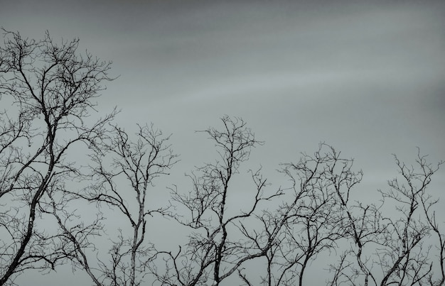 Голое дерево на фоне серого неба