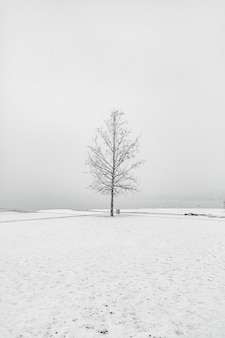 Bare tree in a snowy area under the clear sky