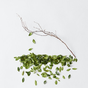잎사귀 하나 없는 벌거벗은 나무. 아름다운 나무와 푸른 잎사귀가 따로 표현되어 있습니다. 떨어지는 잎 나무의 근접 촬영입니다.