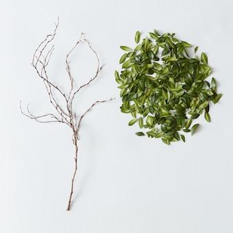 잎사귀 하나 없는 벌거벗은 나무. 아름다운 나무와 푸른 잎사귀가 따로 표현되어 있습니다. 복사 공간은 아이디어나 감정에 사용될 수 있습니다.