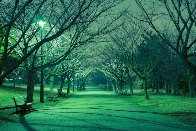 Bare trees alley in japanese park with straight pathway and mystical night illumination
