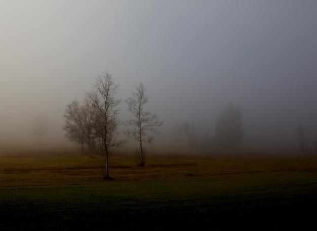 霧に覆われた裸の木