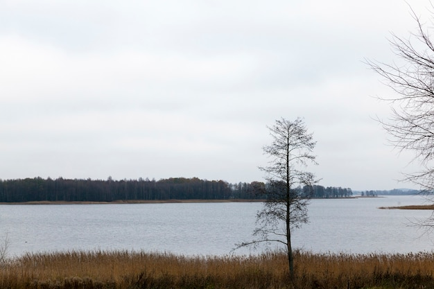 曇りの天気、秋の憂鬱な風景の中で広い湖の岸に生えている裸の木