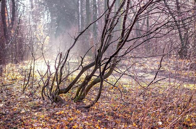 晴天時の秋の森の裸木
