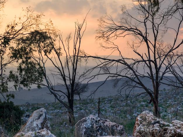 Bare trees on landscape, vered hagalil, sea of galilee, galilee, israel