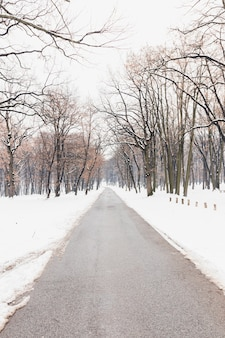 Bare trees near empty road during winter