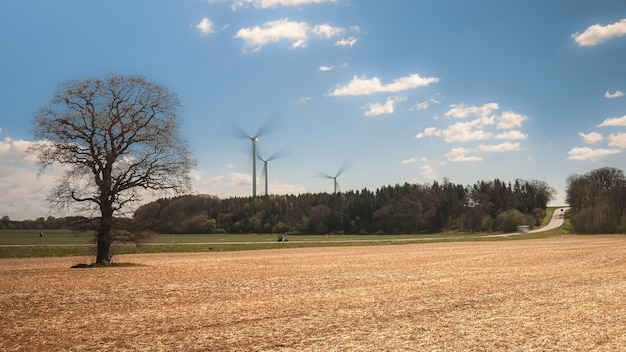 Bare trees in an unsown field waiting for warm with wind turbines generating electricity