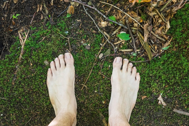 A barefoot aerial view on mossy surface in the forest
