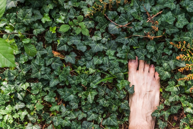 A barefoot aerial view on surface of green leaves in the forest