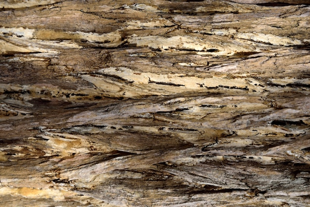 Bark brown background