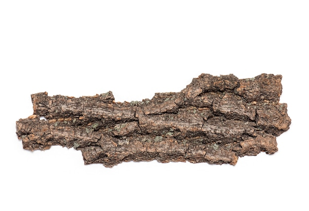 Bark or crust of dry old tree isolated on white background