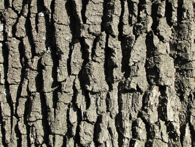Bark oak structure on a bright day