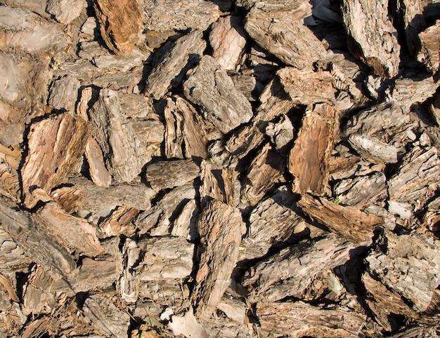 소나무 껍질