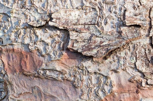 가문비 나무 나무 매크로 촬영, 자연 lihgt의 껍질. 배경 및 질감 용.