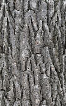 古い大きなレリーフナッツの樹皮