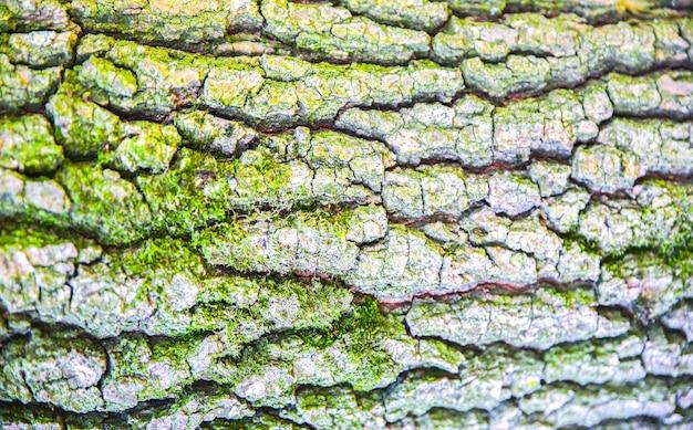 コケの木の樹皮。自然テクスチャの背景。