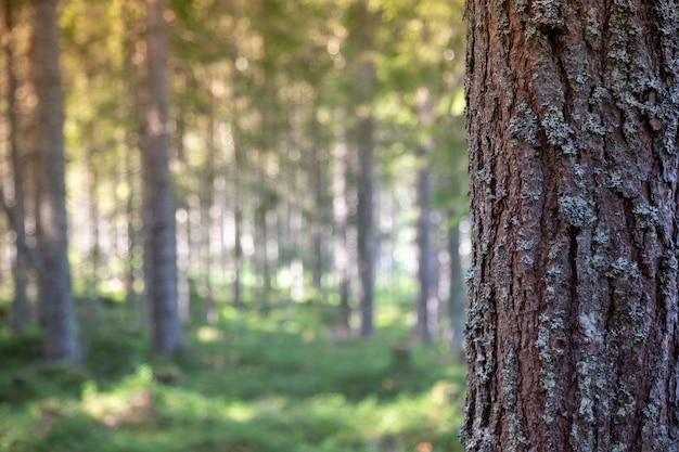 Кора дерева в лесу для текстового сообщения, скопируйте место.