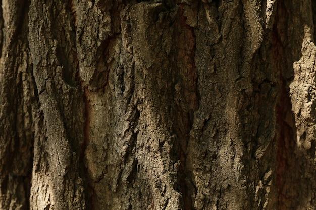 Кора дерева на всем фоне