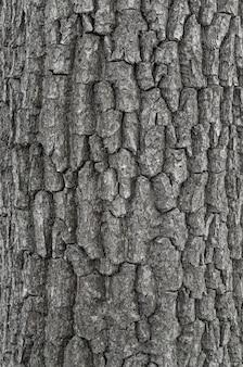 Кора дерева. бесшовная текстура. задний план