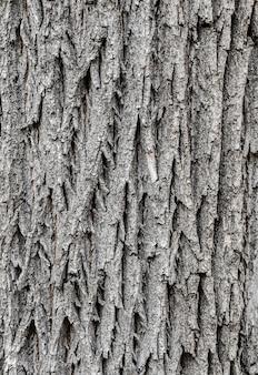 나무 질감의 껍질