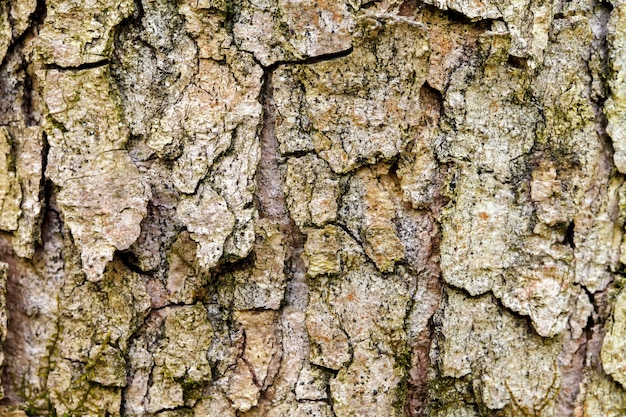 The bark of the old tree. background