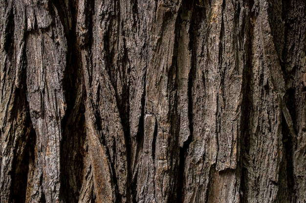 The bark of an old tree is covered with moss. the texture surface of brown wood.