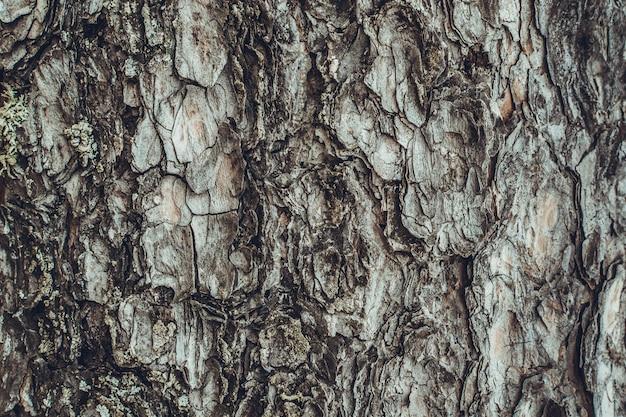 Bark of pine - background